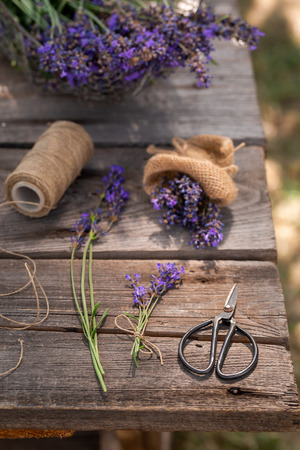 Violet and aromatic lavender freshly harvested in summer