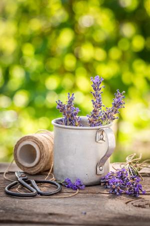 Homegrown lavender in a summer green garden