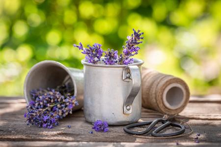 Aromatic lavender in a summer green garden Banco de Imagens