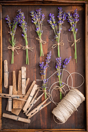 Preparation for drying lavender in summer garden Imagens