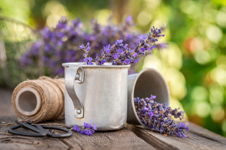 Aromatic and pleasant lavender in summer countryside