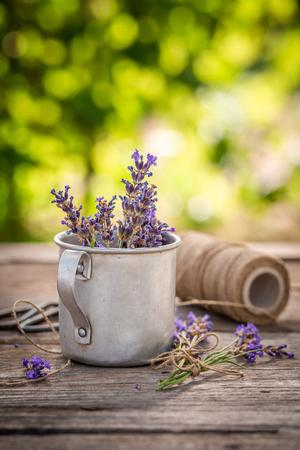 Violet lavender preparation for drying in green garden