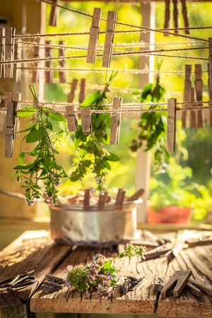 Summer herbal dryer with oregano in garden