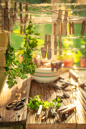 Rustic dryer with mint leaves hanging on lines in summer