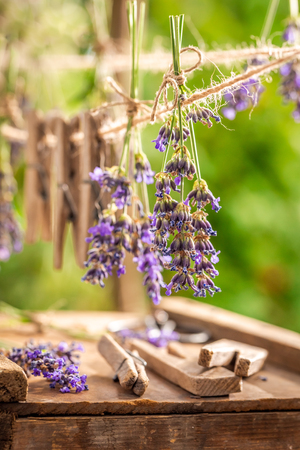 Fresh lavender dried on laundry lines in summer Imagens