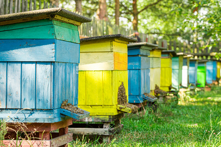 Yellow and blue beehives in garden, Poland Stockfoto