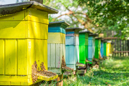 Old wooden beehives in garden in summer, Poland Imagens