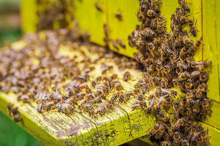 Closeup of beehives with bees in garden in summer, Poland