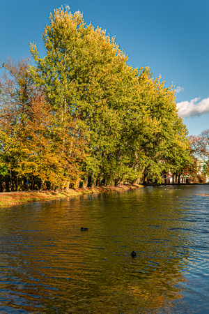 Breathtaking and colorful trees by the river in autumn, Poland