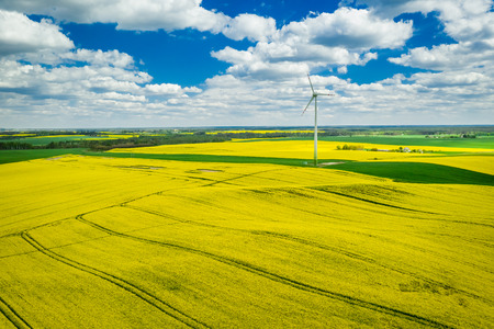 Flying above yellow rape fields with blue sky, Poland