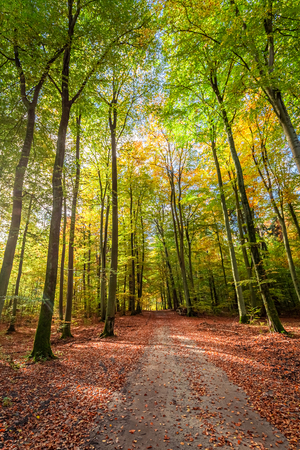 Green and gold path in the forest, Poland
