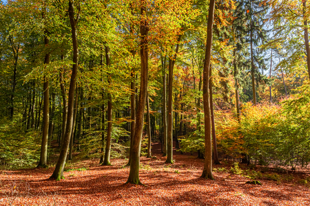 Colorful and amazing path in the forest, Poland Stok Fotoğraf