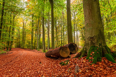 Beautiful and gold path in the forest, Poland Stok Fotoğraf