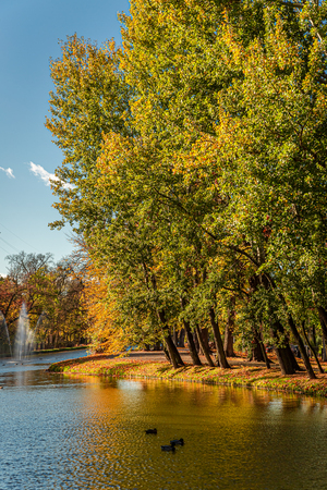 Brown and green trees by the river in autumn, Europe