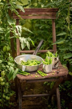 Green peas on old wooden summer chair