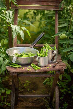 Raw green peas on old wooden summer chair
