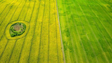 Gelbe und grüne Rapsfelder, Luftbild von Polen Standard-Bild