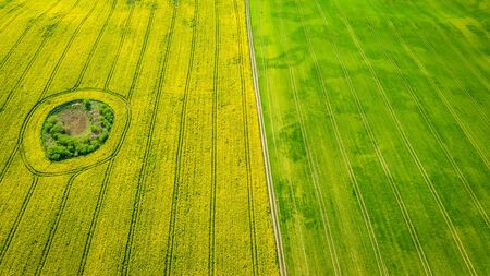 Yellow and green rape fields, aerial view of Poland