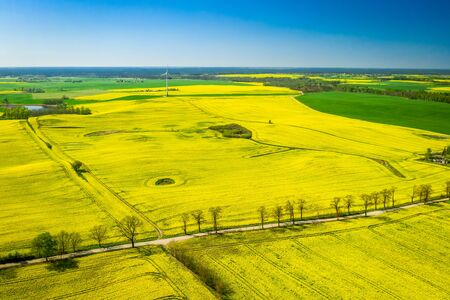 Aerial view of green rape fields and wind turbine Reklamní fotografie