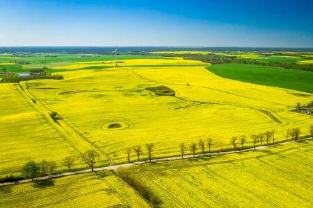 Luftaufnahme von grünen Rapsfeldern und Windkraftanlage