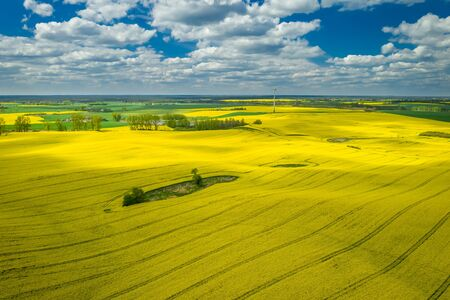 Flying above yellow rape fields with blue sky, Europe Reklamní fotografie