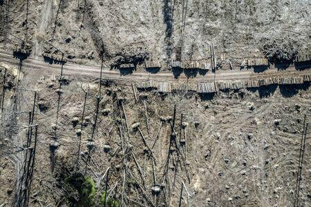 Terrible deforestation, logging, environmental destruction, aerial view of Poland