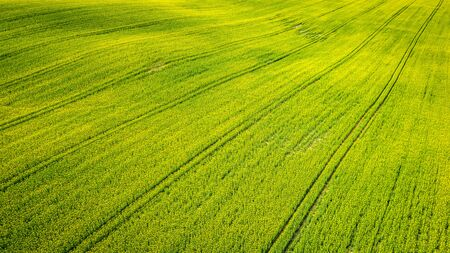 Yellow rape fields in the summer, aerial view of Poland Reklamní fotografie