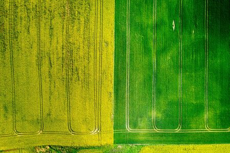 Green and yellow rape fields in Poland, from above