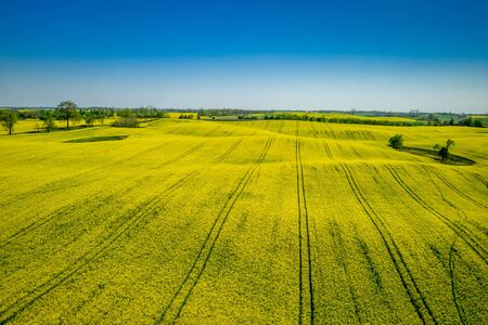 Aerial viewof green and yellow rape fields, Poland