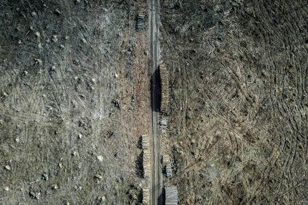 Horrible deforestation. harvesting a forest, view form above