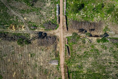 Deforestation as environmental destruction, aerial view, Poland Stock Photo