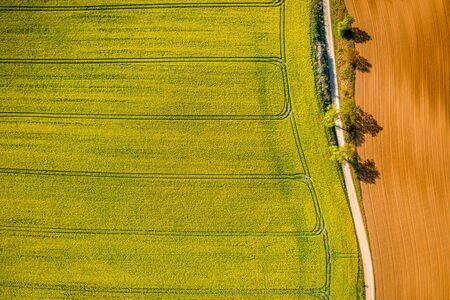 Yellow rape fields in the countryside, aerial view of Poland