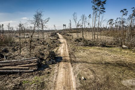 Terrible deforestation, logging, environmental destruction, from above Poland 版權商用圖片