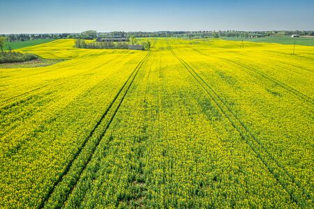 Flying above yellow rape fields, aerial view of Poland Reklamní fotografie