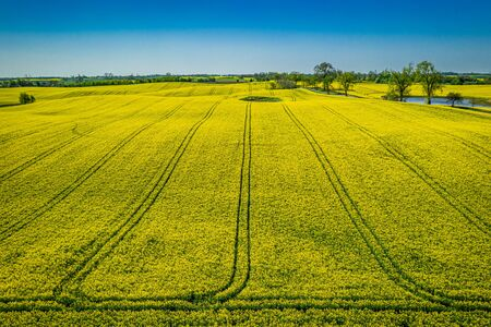 Flying above yellow rape fields in the spring, from above Reklamní fotografie