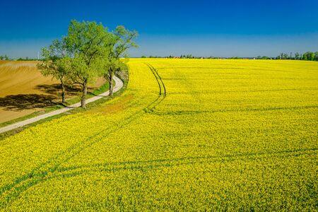 Blühende gelbe Rapsfelder im Frühjahr, Luftbild von Polen