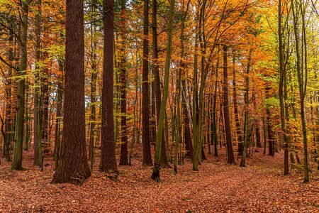 Amazing and colorful autumn in the forest in Europe