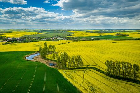 Flying above yellow rape fields in spring, Poland Reklamní fotografie