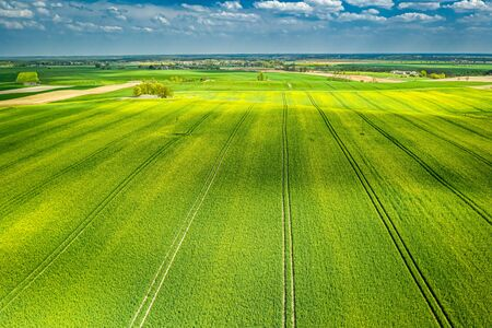 Blooming rape fields in sunny day, aerial view of Poland