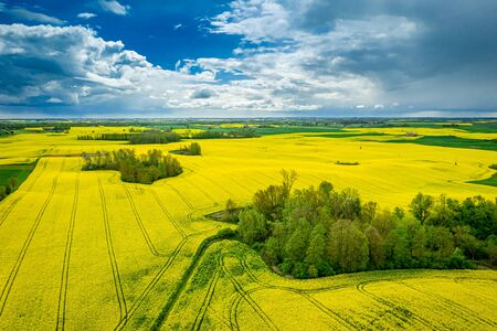 Blooming rape fields in summer, aerial view of Poland Reklamní fotografie