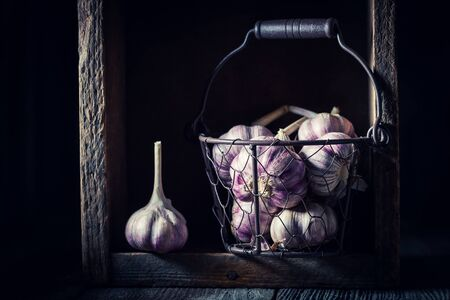 Aromatic garlic in old rustic metal basket