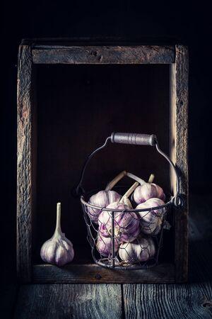 Fresh and aromatic rustic garlic in old metal basket