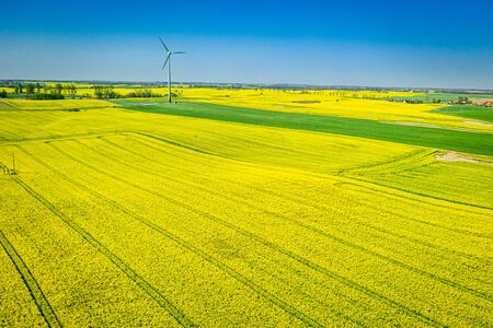 Yellow rape fields and wind turbine, Poland from above