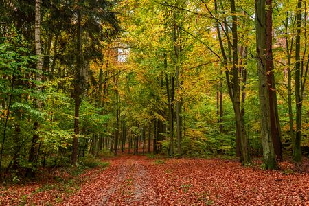 Sunny green and brown forest in the autumn, Poland