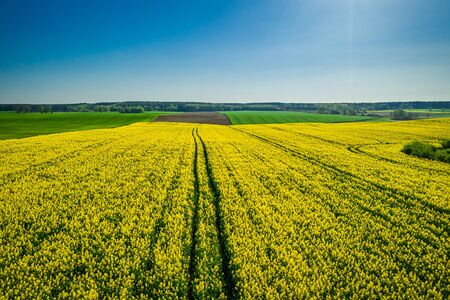 Green and yellow rape fields, Poland from above Reklamní fotografie