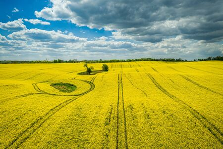 Yellow rape fields with blue sky, Poland, aerial view Reklamní fotografie