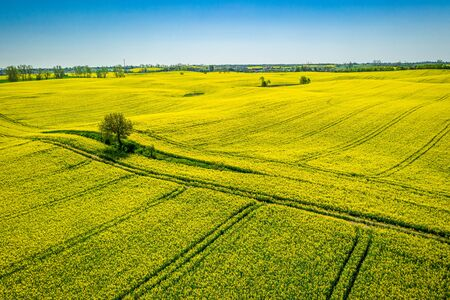 Flying above yellow rape fields, Poland from above Reklamní fotografie