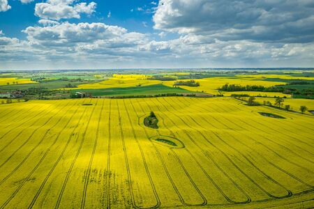 Yellow rape fields with blue sky, Poland from above