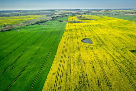 Yellow and green rape fields, Poland from above Reklamní fotografie