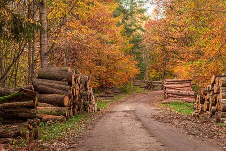 Country road and cut trees in the autumn in Poland